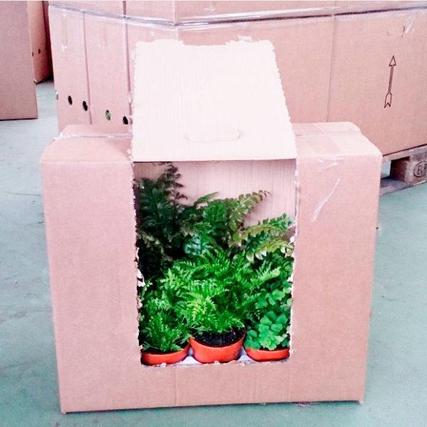 preparacion de plantas